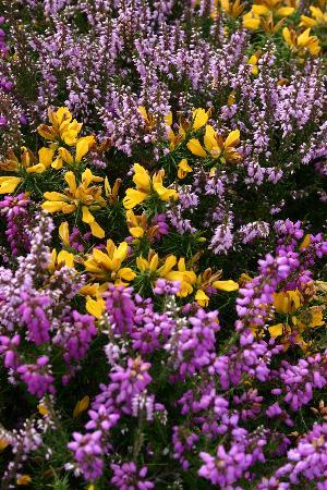 Exmoor Country House: Vibrant Colours on Selworthy Beacon