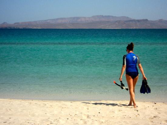 Playa El Tecolote Beach Getting Ready To Snorkel