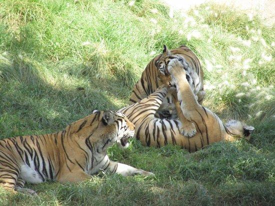 Terra Natura: Here Be Tigers