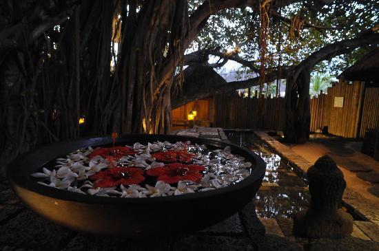 Canonnier Beachcomber Golf Resort & Spa: Le centre de beauté se trouve ... dans un arbre géant !!!