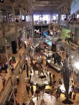 พิพิธภัณฑ์แห่งชาติสก็อตแลนด์: Redisigned galleries