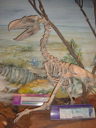 """Trelew, Argentina: Paleontological Museum """"Egidio Feruglio"""" (MEF)"""