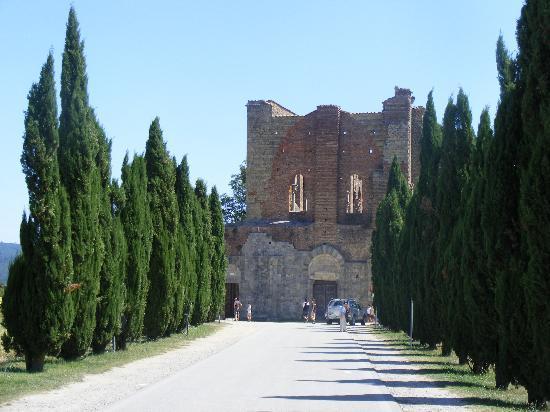 Abbazia di San Galgano: Il viale per arrivare all'abbazia