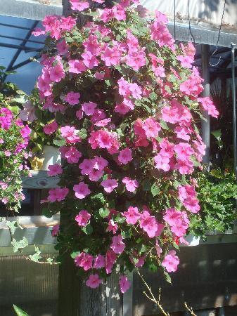 بايبيري هاوس بيد آند بريكفاست: The flowers of Maine