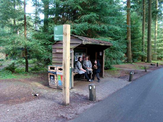 Center Parcs Longleat Forest: Waiting for the land train