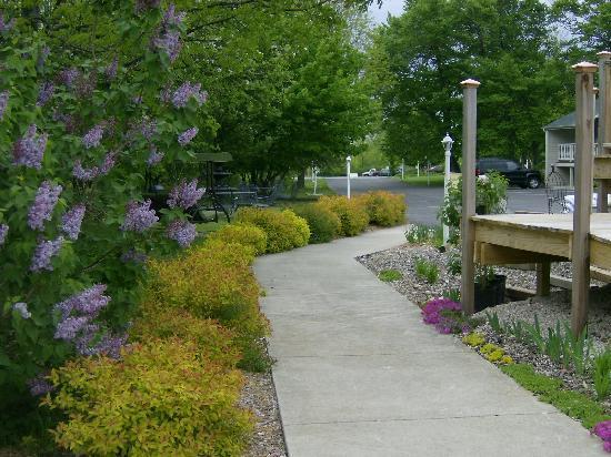 Ephraim Motel : Springtime lilacs
