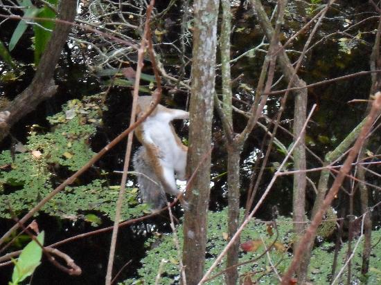 Lettuce Lake Regional Park : There are tons of squirrels here