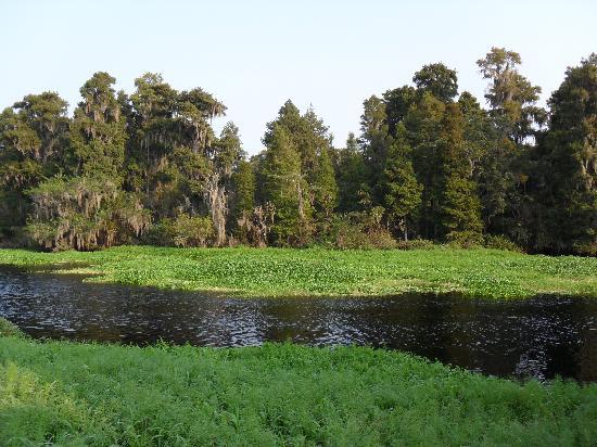 Lettuce Lake Regional Park : Hillsborough River