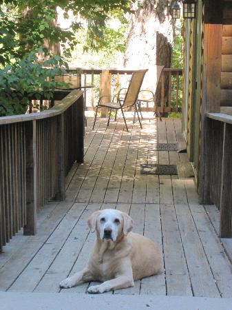 Lure Resort : The dog loves this place