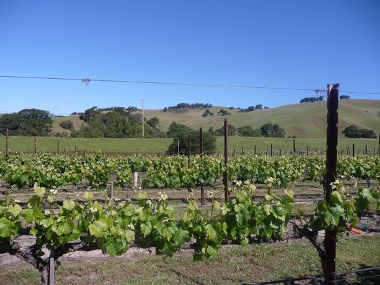Consort Wine Tours: Our first stop: Elkhorn Peak Cellars