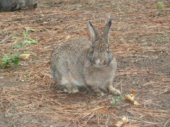 Parco Naturale di Cervia : Coniglio in libertà