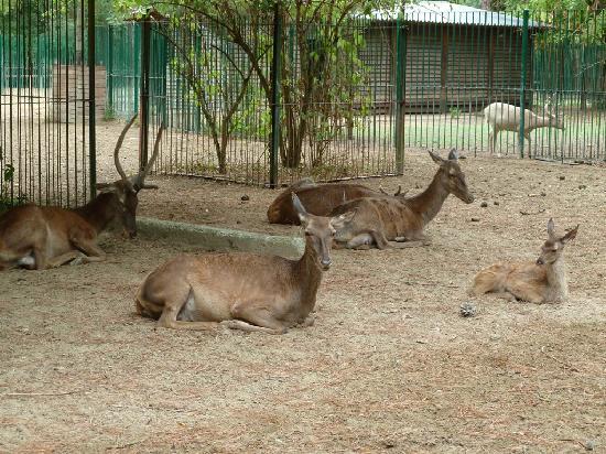 Cervia, Italie : Cervi e daini