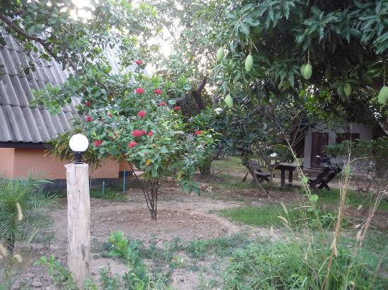 Cashewnut Tree Bungalows: General view, Cashewnut Tree
