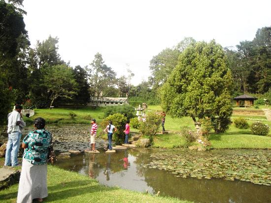Victoria Park of Nuwara Eliya: The Japanese Garden