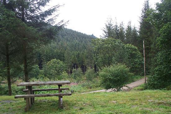 Trallwm Forest Cottages: The Garden!