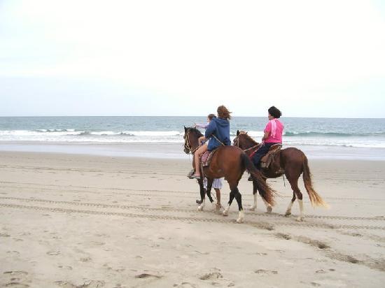 Vichayito Bungalows & Carpas by Aranwa: hay caballos