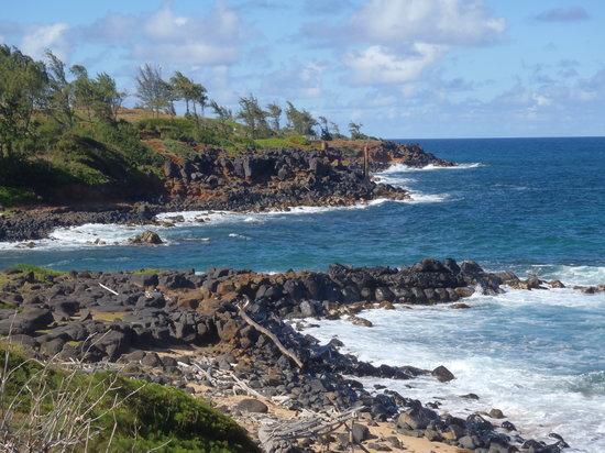 Coconut Coasters Beach Bike Rentals: Kapaa coastline