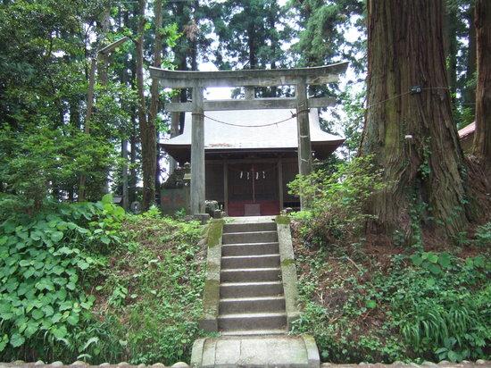 Suginamiki Park: 並木の中の神社