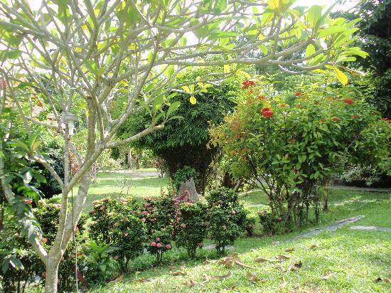 Green Villa : Le jardin
