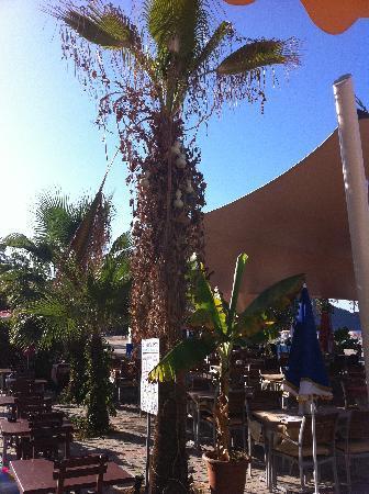 Azak Beach Hotel: so traurig wie diese Palme, schaut das ganze Hotel aus!!!