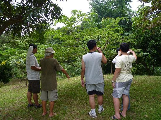 Taiwan Thumb-up B&B: 認識各種樹