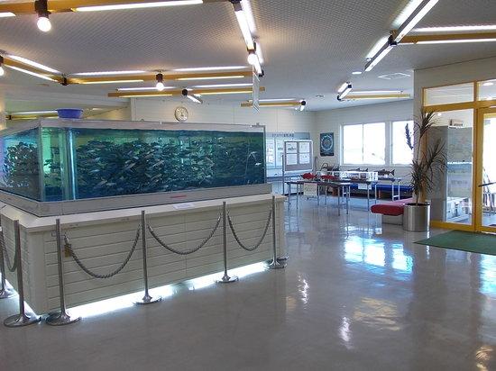Sake no Sato Fureai Hiroba: 展示館内水槽
