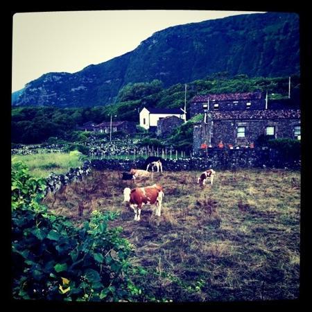 Aldeia da Cuada: Cows