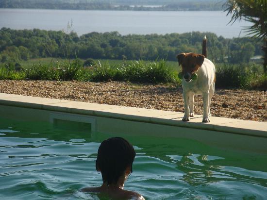 Bordeaux Chateau B&B: Der Schlosshund und unser Sohn haben gemeinsam Spaß am Pool