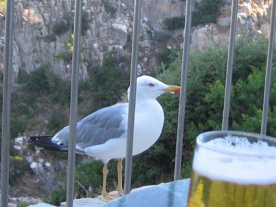 Parador De Aiguablava: テラスでビールを飲んでいるとカモメが