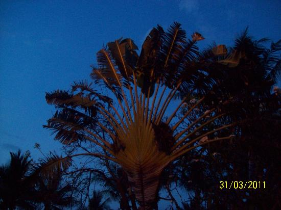 Coconut Bay Resort: palm tree on property
