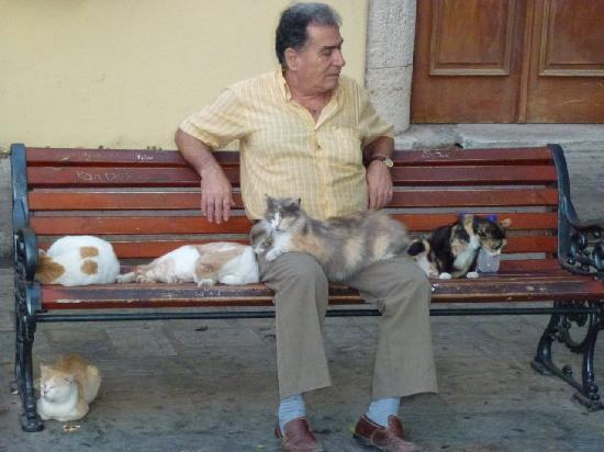 Sensimar Palazzo del Mare: Cat lover in Kos town