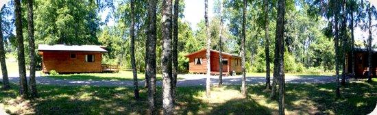 Centro Turistico Los Robles: bosque entre las cabañas