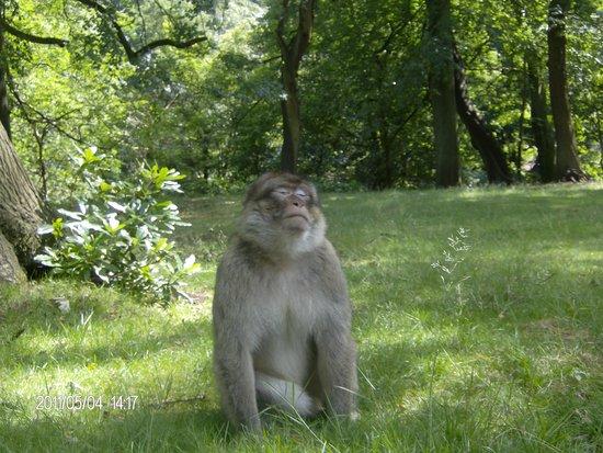 Trentham Monkey Forest: u talkin to me?
