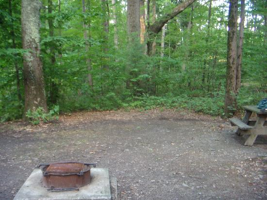 Watkins Glen State Park Campground: Site 207
