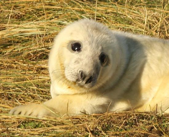 Donna Nook Nature Reserve: Seals 10