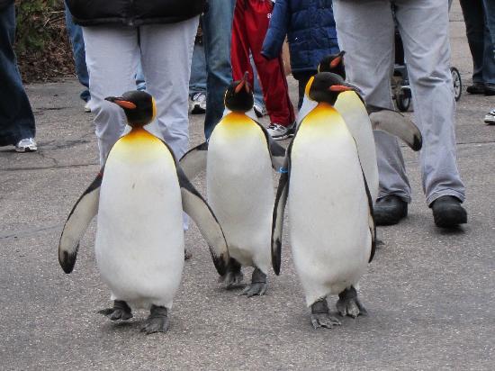 Cincinnati Zoo & Botanical Garden : the penguin walk