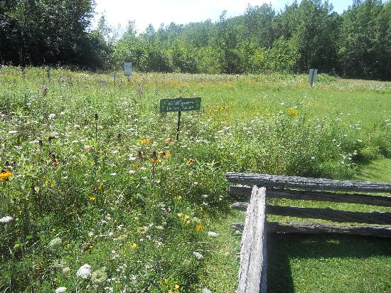 the wildflower field at vermont wildflower farm picture of