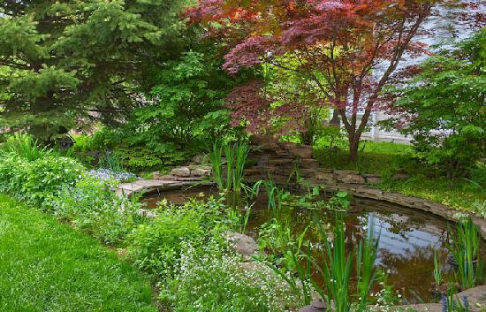 Cedar Gables Bed and Breakfast: Backyard pond