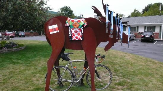 توب نوتش إن: Moose from the TopNotch races up Mt Washington
