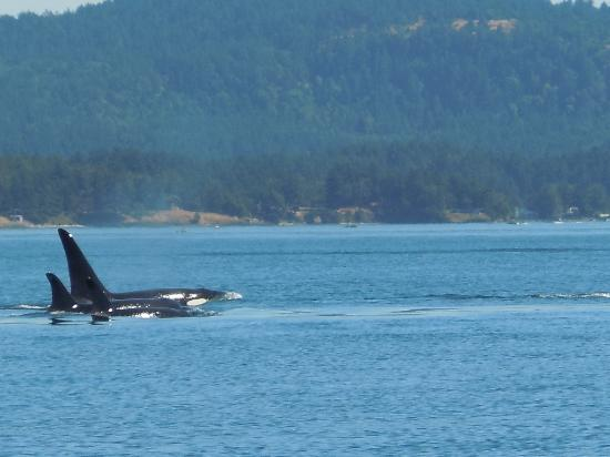 Cowichan Bay, Canadá: beautiful animals, great scenery