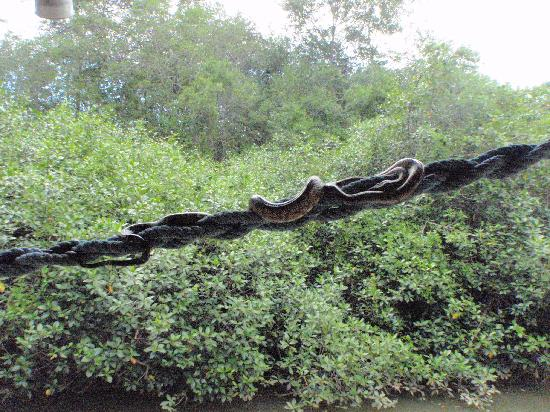 Kayak Lodge: The Boa Constrictor oustide our room....