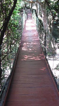 Sekenani Camp: il ponte sospeso