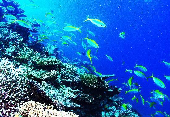 Centara Grand Island Resort & Spa Maldives: House reef