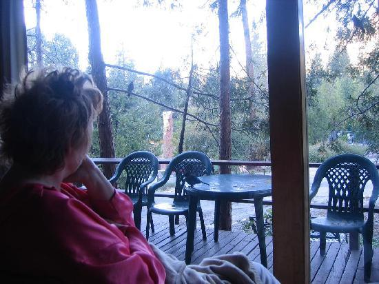 Woodland Park Manor: Watching birds from inside the room