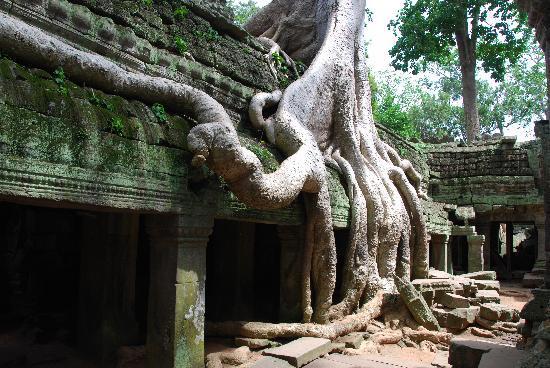 """Angkor Wat: """"tomb rider"""""""