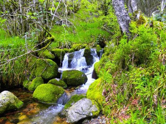 Casa La Fonte: Reserva Integral de Muniellos