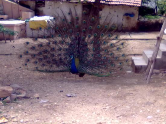 Shringeri Stay: once saw peacock in backside of this place