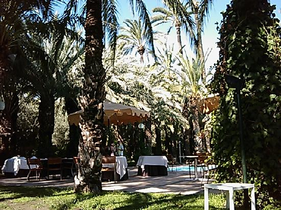 Ancora il palmeto che circonda la piscina picture of for Jardin milenio