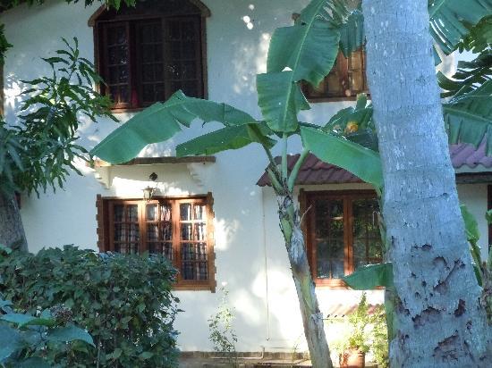 Duqueza de Connaught Guesthouse : admiring a palm-tree