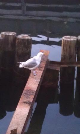 Cape Ann's Marina Resort: Seagull from the deck of our room.